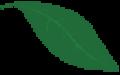 separatore-sito-foglia